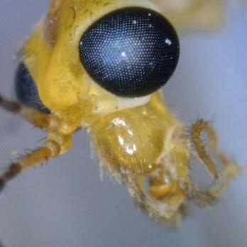 microscope-digital-dino-lite-2111-3